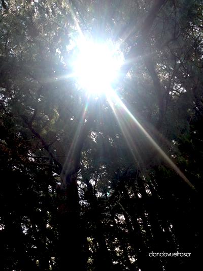 bosque-de-la-hoja-dandovueltascr-5