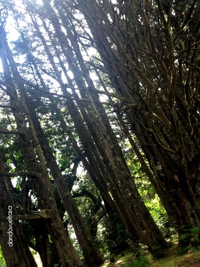 bosque-de-la-hoja-dandovueltascr2