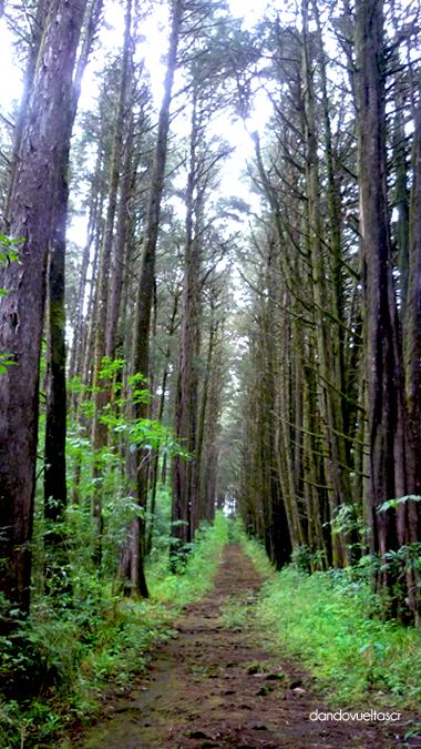 bosque-de-la-hoja-dandovueltascr3