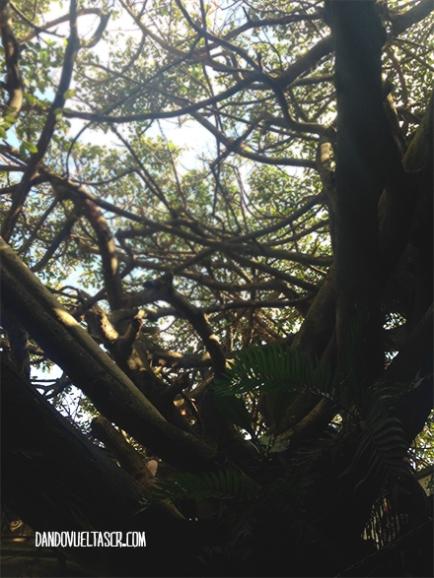 dandovueltascr-treehouse-1