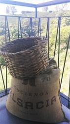 hacienda-alsacia-dandovueltascr-5