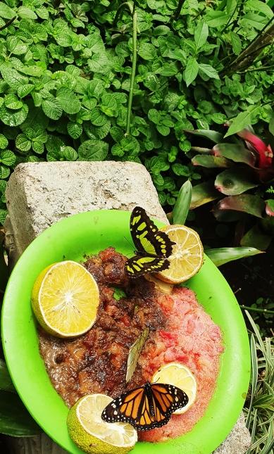 dandovueltascr-5-butterflykingdom