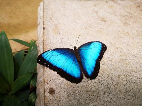 dandovueltascr-butterflykingdom6