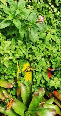dandovueltascr4-butterflykingdom